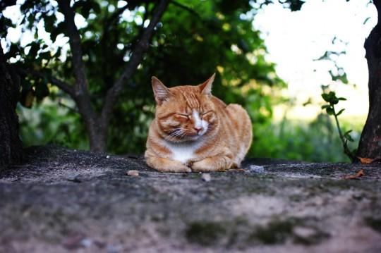 피곤한 고양이